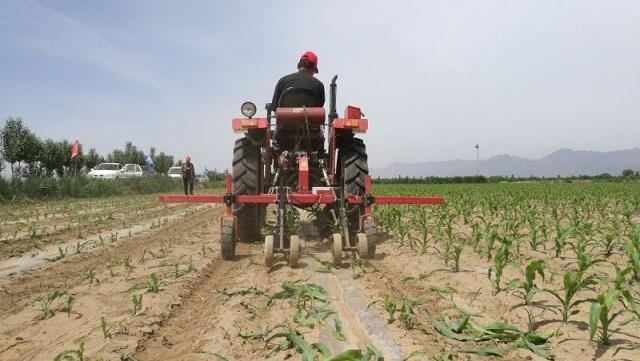 割苗促增产  农民尝甜头!