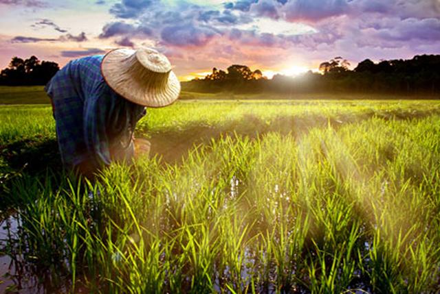 农资零售竞争迎来下半场,该如何破局?