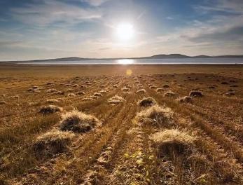 土壤连作障碍要先防后治、防治结合