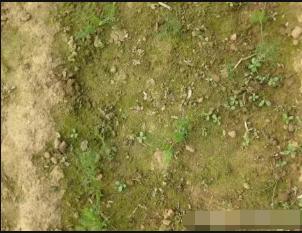 土壤长绿苔,千万别小视!
