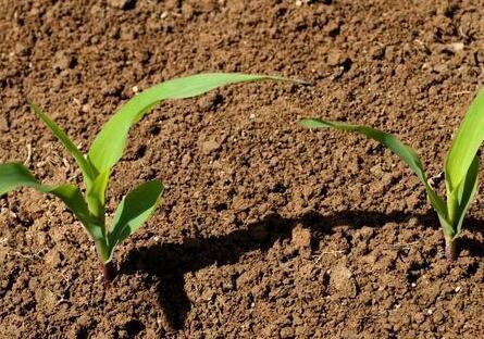 蚯蚓对土壤的作用