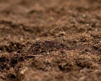 十亿含量菌肥没作用?这样调理土壤试一试!