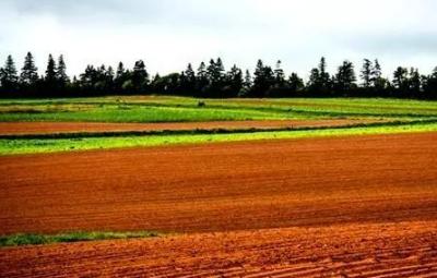 辨别土壤肥力高低,就靠这10点!