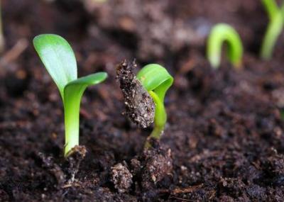 土壤盐渍化的危害有多大?这5点治理措施,能否改良土壤?