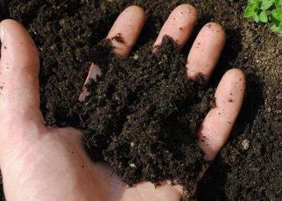 土壤出现了问题,这可不是小事,四种方法轻松解决,还等什么!