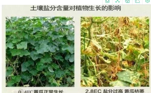 六大因素影响土壤健康与农作物生长
