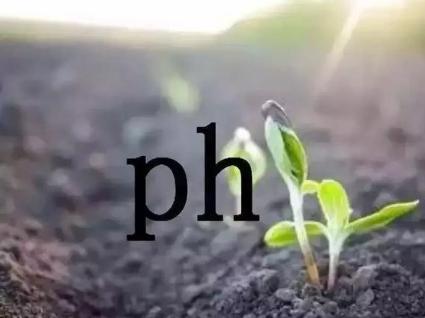 土壤酸化问题怎么办?别不舍得用有机肥!