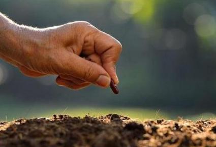 """把土壤养""""肥""""的技巧!大家要擦亮眼睛好好选肥"""
