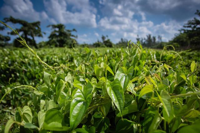 新型化肥进军化肥市场,发展空间巨大