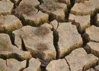 土壤板结严重,是这个原因造成的,要尽快改善