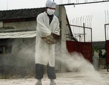 生石灰改良土壤怎么用?这些地方要注意