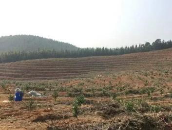 果园土壤改良方案 这回说的最靠谱!土壤管理是农业生产中非常重要的一环,对果园来说尤其重要。土壤质地、