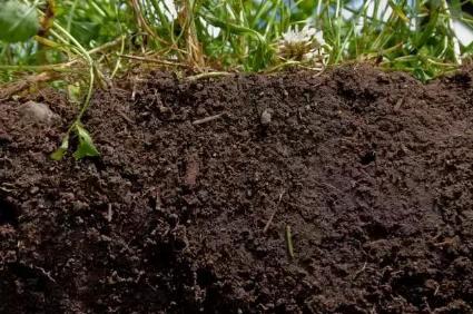 健康的土壤应该是啥样的?究竟健康土壤对作物生长有多重要?