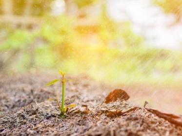 土壤调理剂,真正的作用!这就是80%的人选择它的原因