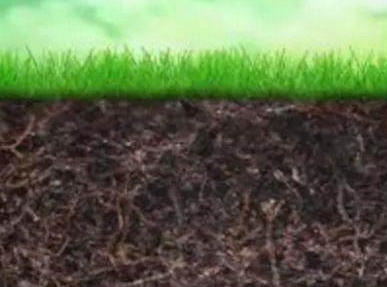 土壤缺啥补啥,作物需啥施啥,就可以优质高产