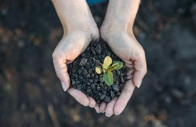 养花种菜的土壤分类您知道吗?