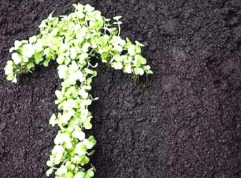 腐殖酸肥料:调控土壤微生物,改善土壤好帮手
