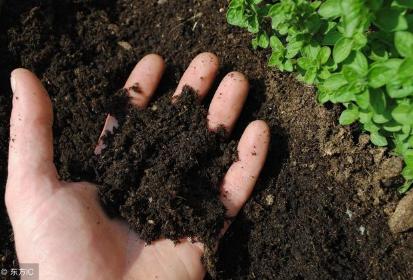 微生物菌剂为什么能让土壤恢复健康?