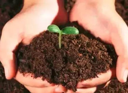 如何改善土壤,让蔬菜根系更有活力?
