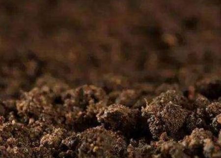 坚持这几点,你棚内的土壤也拥有团粒结构!