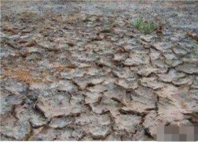 教你怎么判断土壤的酸碱性