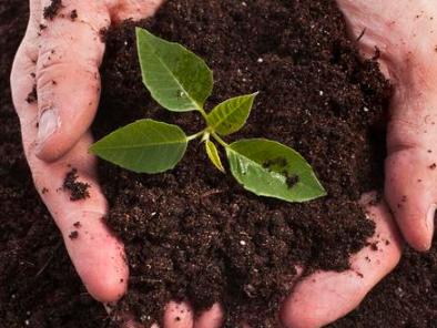 土壤不疏松,根系不透气,怎么都长不好!
