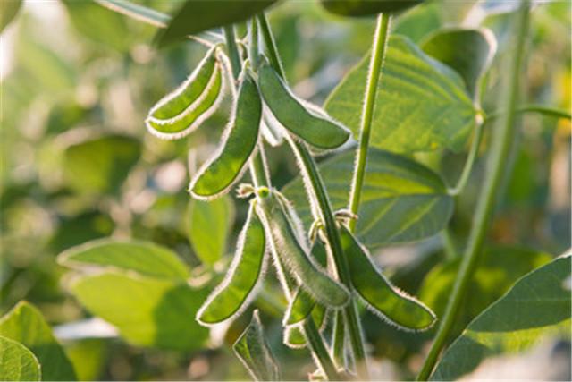 种大豆也能学知识?这些技巧你之前一定不知道