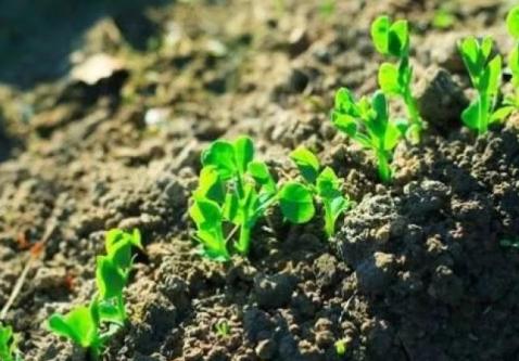 一招鉴别果园土壤好不好!土壤pH值为5.4~6.8