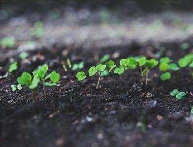强还原土壤灭菌法保障土壤健康