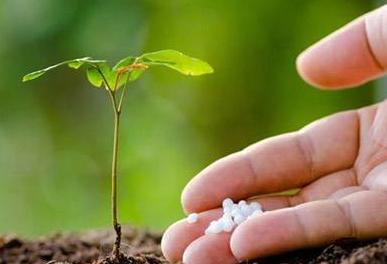 【微生物】想土壤改良,做好这6件事!
