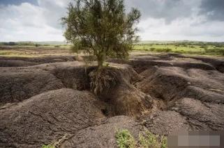 【土壤】我们为什么要保护土壤的五个理由!
