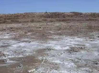 """土壤改良专家张霞:以技术创新立志让""""荒滩变良田"""""""