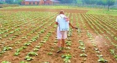 化肥农药过量 如何改良土壤