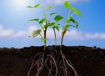 土壤中微生物的相互作用