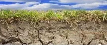 土壤改良新方向,破解大棚蔬菜连作、重茬减产难题