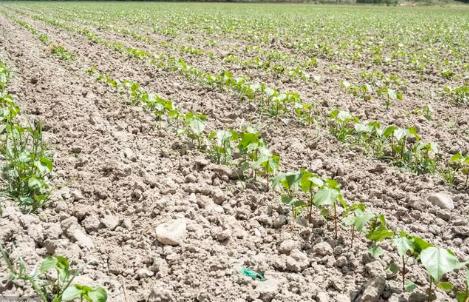 土壤治理和我们每个人都息息相关