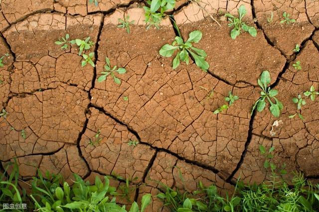 为什么保护土壤越来越重要?有哪些必要性?