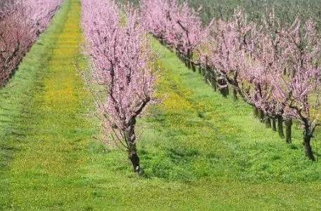 果园土壤改良方法