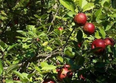 果园土壤特点与施肥原则
