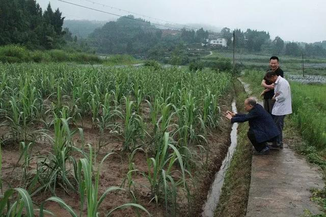 战友兴农:探索退役军人农业扶贫新模式