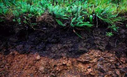 大棚土壤盐渍化严重怎么办 土壤盐渍化的解决措施