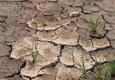 八个字讲透土壤问题:板、馋、贫、浅、酸、咸、脏、杂