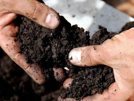 土壤肥不肥、是酸性还是碱性?咋判断?很简单,不花一分钱