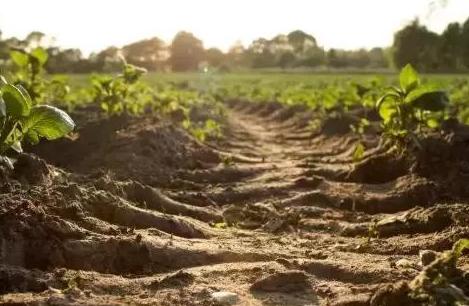 你可知道土壤和石油一样,也是不可再生资源?用完就没了