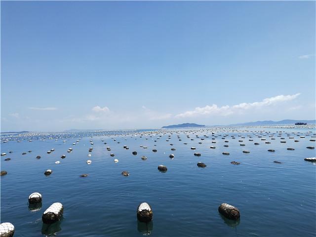 探秘牡蛎、海藻产地!震感、过瘾!