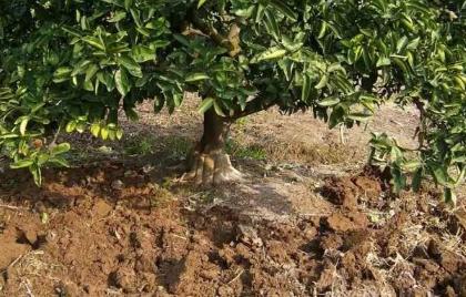 土壤改良、影响土壤作物健康的3大要素素,务必要牢记