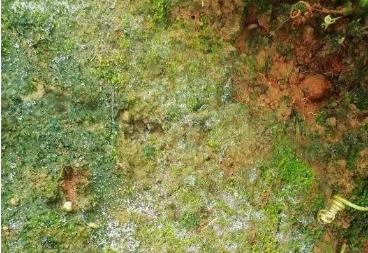 常见十大土壤病你知道几个?