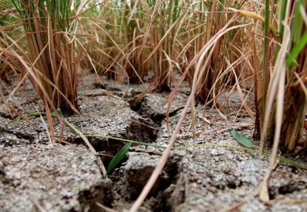 农业生产,撒好一手好石灰,改善土壤品质,增质增产