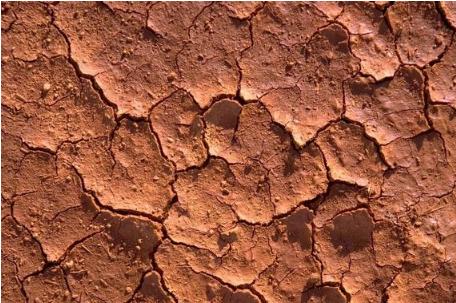 土壤酸碱度决定肥料的利用率,几种方法快速判断土壤酸碱度