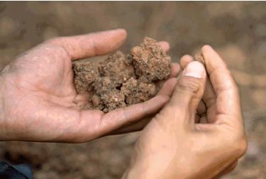 土壤酸化危害多,施肥不合理是主因,这样施肥土质好产量高